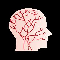 頭皮の血管は均等ではない