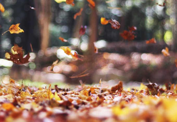 季節の変わり目秋口にナゼ抜け毛が増加?薄毛も進行するの?